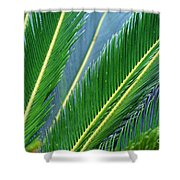 Palm Cycas Fronds Shower Curtain