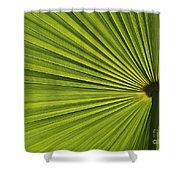 Palm Fron Abstract Shower Curtain