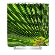Palm Frond Shower Curtain