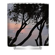 Palm Haven Shower Curtain