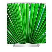 Palm Leaf 6687 Shower Curtain