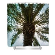 Palm Light Shower Curtain