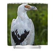 Palm-nut Vulture 2 Shower Curtain