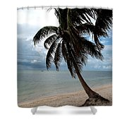 Palm On The Beach Shower Curtain