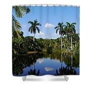 Palm Reflection And Shadow Shower Curtain