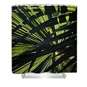 Palm Shadows Shower Curtain