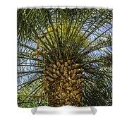 Palm Sky Shower Curtain