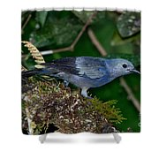Palm Tanager Shower Curtain
