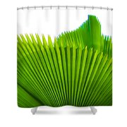 Palm Tree 12 Shower Curtain