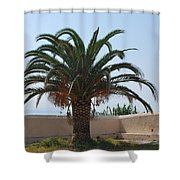Palm Tree 3 Shower Curtain
