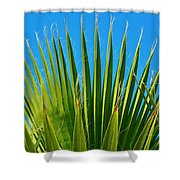 Palm Tree And Blue Sky 2/06 Shower Curtain