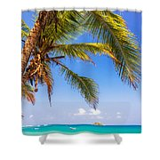 Palm Tree And Caribbean Shower Curtain