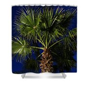 Palm Tree At Night Shower Curtain