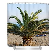 Palm Tree By The Beach Shower Curtain