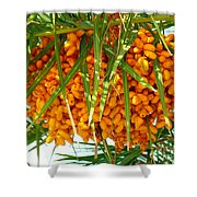 Palm Tree Fruit 1 Shower Curtain