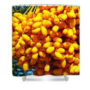Palm Tree Fruit 2 Shower Curtain