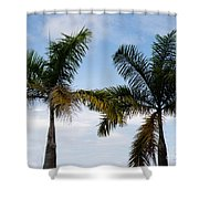 Palm Tree In Costa Rica Shower Curtain