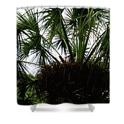 Palm Tree In Curacao Shower Curtain