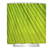 Palm Tree Leaf Abstract Shower Curtain