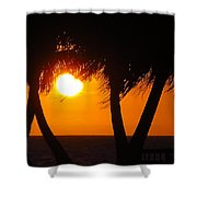 Palm Tree Silhouette At Sunset Shower Curtain