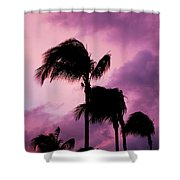 Palm Tree Silhouettes At Dusk In Aruba Shower Curtain