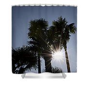 Palm Trees In Backlit Shower Curtain