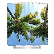 Palm Trees In Puerto Rico Shower Curtain