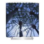 Palm Trees In The Sun Shower Curtain
