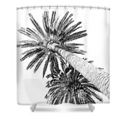 Palm Tree White Shower Curtain