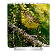 Palm Warbler Pictures 38 Shower Curtain