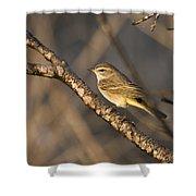 Palm Warbler Shower Curtain