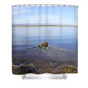 Palm Water Shower Curtain