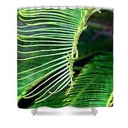 Palme Cycas Shower Curtain