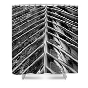 Palms E The Other Way In Black And White Shower Curtain