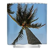 Palms Over My Head Shower Curtain