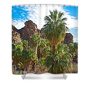 Palms Stand Tall In Andreas Canyon In Indian Canyons-ca Shower Curtain