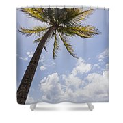 Palms Trees Along Luquillo Beach In Puerto Rico Shower Curtain