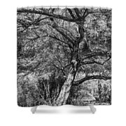 Palo Verde In Black And White Shower Curtain