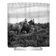 Palomino - Buttes - Wild Horses - Bw Shower Curtain