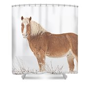 Palomino Horse In The Snow Shower Curtain