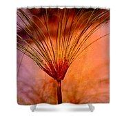 Pampas Grass - II Shower Curtain