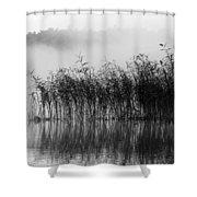 Pampas Grass In Fog Shower Curtain