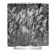 Pampas Grass Monochrome Shower Curtain
