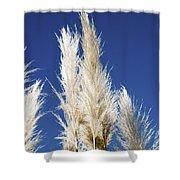 Pampas Grass Shower Curtain