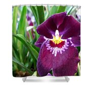 Pancy Orchid Shower Curtain