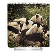 Pandamonium Shower Curtain by Joan Carroll