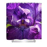 Pandora's Purple Shower Curtain