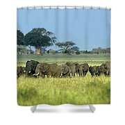 Panorama African Elephant Herd Endangered Species Tanzania Shower Curtain