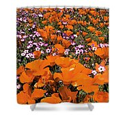 Panorama Califonria Poppies And Hollyleaf Gilia Wildflowers Shower Curtain