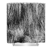 Panorama Winter Trees B And W Shower Curtain
